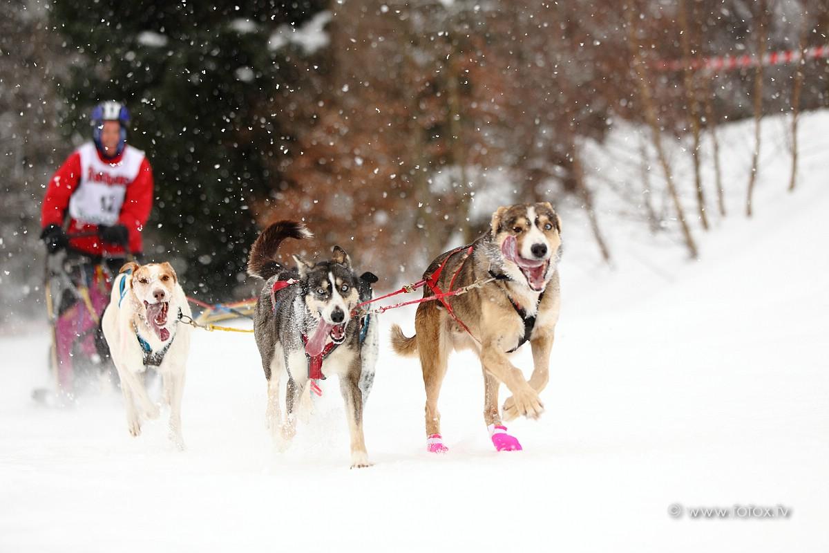 Hundeschlittenrennen in Todtmoos